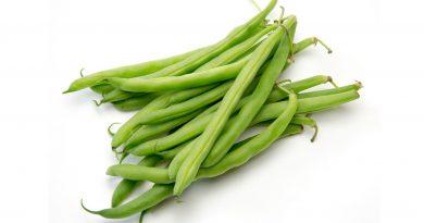 ФАСОЛЬ ОБЫКНОВЕННАЯ (Phaseolus vulgaris L.)