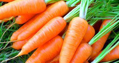 МОРКОВЬ ПОСЕВНАЯ (морковь огородная) (Daucus sativus Roehl.)