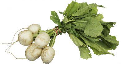 РЕПА ОГОРОДНАЯ (Brassica rapa L.)
