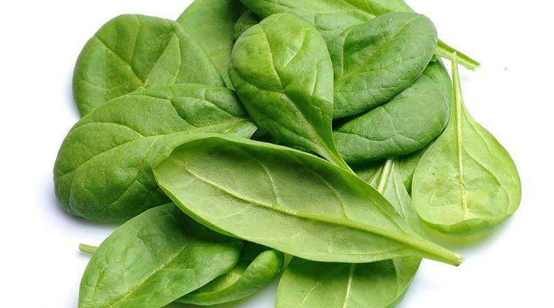 ШПИНАТ ОГОРОДНЫЙ (Spinacia oleracea L.)
